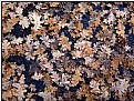 Picture Title - oakleaf carpet