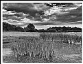 Picture Title - **B&W IV**