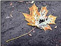 Picture Title - the dying leaf