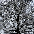 Picture Title - wintertree
