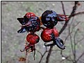 Picture Title - frozen berries