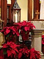 Picture Title - Poinsettias & Peace Light