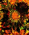 Picture Title - Sunflower Mix