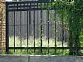 Picture Title - Fence & Vine