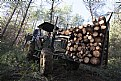 Picture Title - Forestry Workers