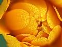 Picture Title - Orange  Juice