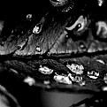 Picture Title - Rose Leaf