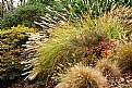 Picture Title - Grasses & Color