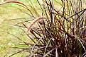 Picture Title - Grasses