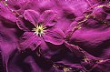 Picture Title - Purple Clematis