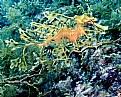 Picture Title - More Leafy