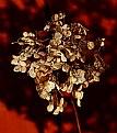 Picture Title - Autumn Flower