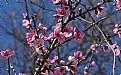 Picture Title - wild peach