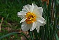 Picture Title - nother daff