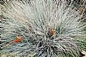 Picture Title - Ornamental Grass