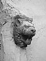 Picture Title - Lion Head