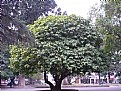 Picture Title - Trees & Street
