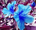 Picture Title - Blue Flower