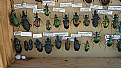 Picture Title - Chinese Ground Beetles