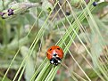 Picture Title - Coccinellidae