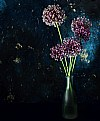 Picture Title - allium flowers