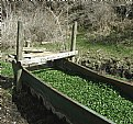 Picture Title - Water Trough