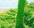 Picture Title - Green &  Sea