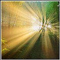 Picture Title - **The Light  II**