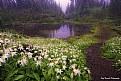 Picture Title - Wonderland Trail