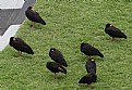 Picture Title - Birds