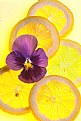 Picture Title - Lemon with Pansy