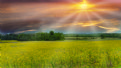Picture Title - Golden Field