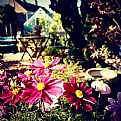Picture Title - My Garden