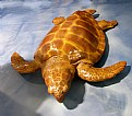Picture Title - Wooden Sea Turtle