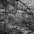 Picture Title - tigress sitting in the bushes