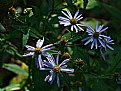 Picture Title - aster-nomical
