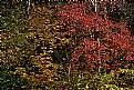 Picture Title - tri-color