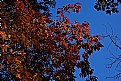 Picture Title - fall sky