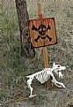 Picture Title - Dog Bones