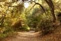 """Picture Title - """"Stream Trail"""""""