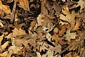 "Picture Title - ""Fall Leaves"""