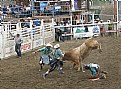 Picture Title - Bull Riding