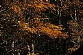 Picture Title - gold leaf