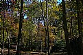 Picture Title - deep woods