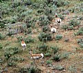 Picture Title - Antelope
