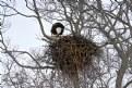 Picture Title - Eagles Nest