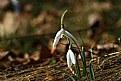 Picture Title - December no snow drop