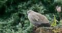 Picture Title - Garden Bird