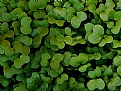 Picture Title - Green Leaves