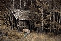 Picture Title - Cabin with Deer